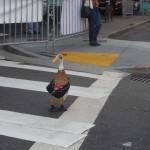 duck-dapper